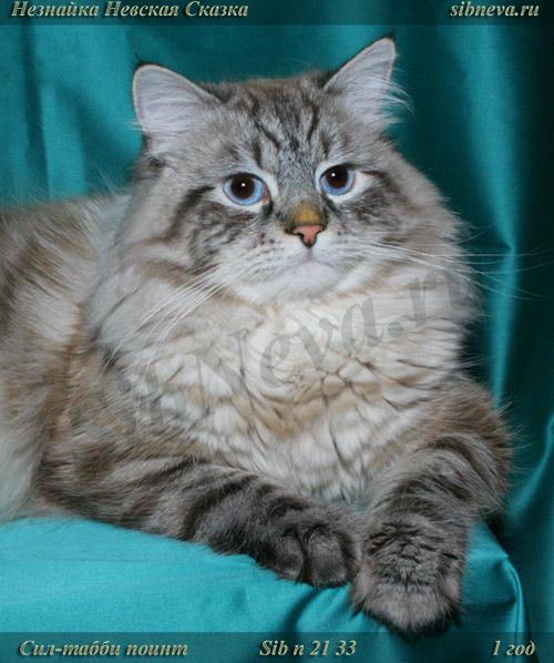 Невский маскарадный кот Незнайка Невская Сказка